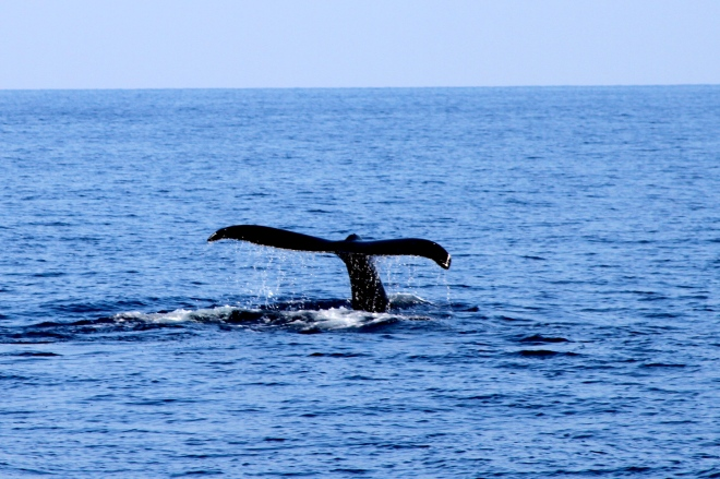 Amazing sightings during a whale watching cruise
